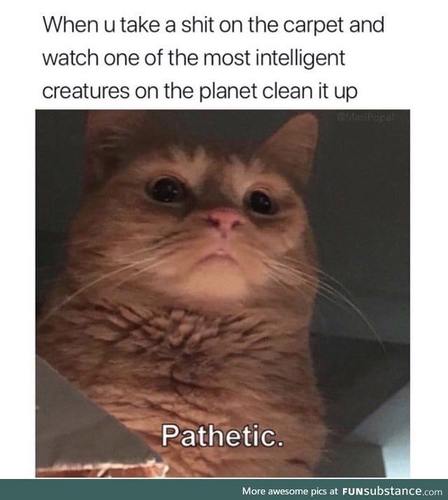 This Literally Looks Like My Cat Funsubstance In 2021 Really Funny Memes Funny Pictures Funny Science Jokes
