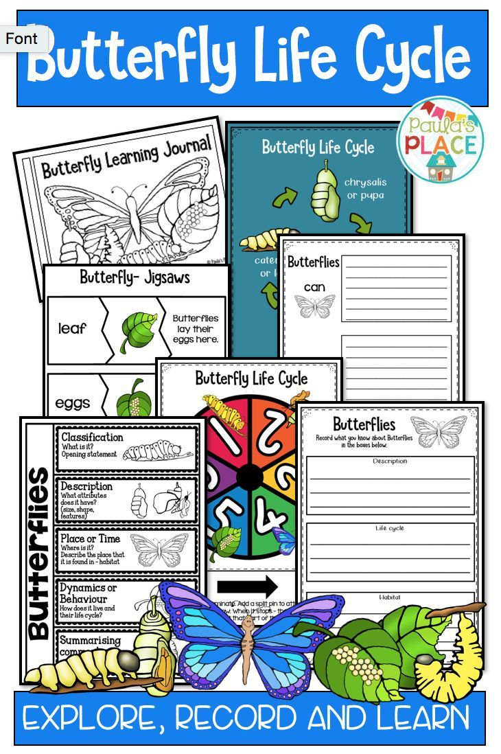 Predownload: Butterfly Life Cycle Activities And Worksheets Butterfly Life Cycle Butterfly Life Cycle Activity Life Cycles Activities [ 1098 x 730 Pixel ]