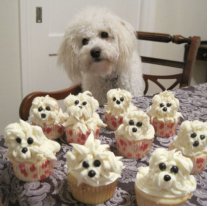 Would You Like Some Pupcakes?