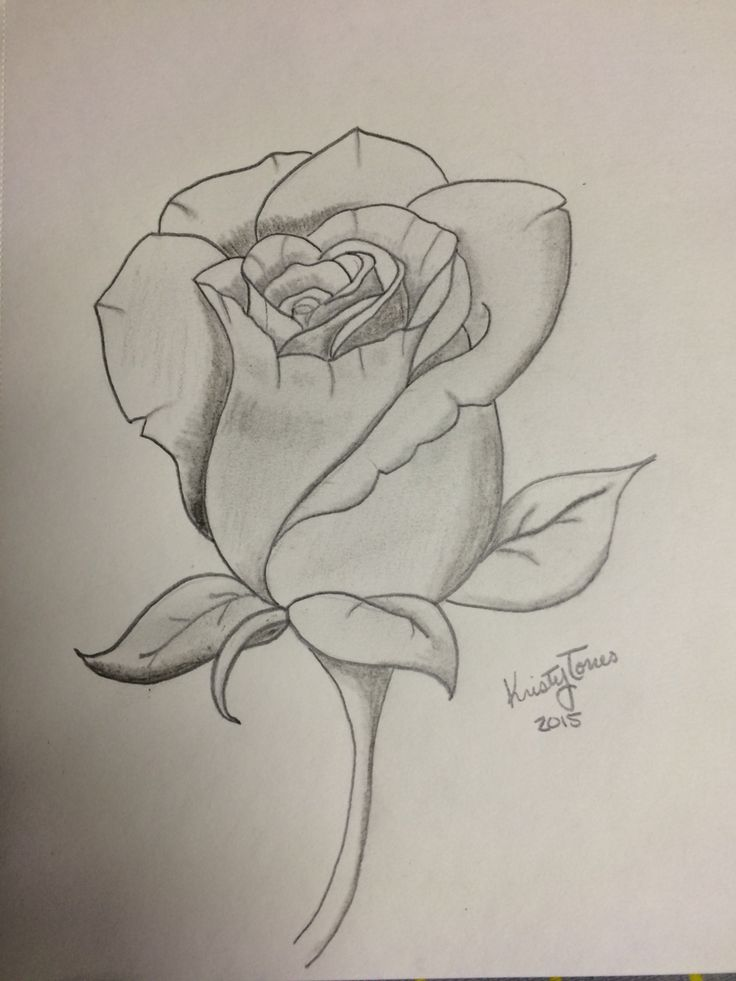 rose drawing in 2019