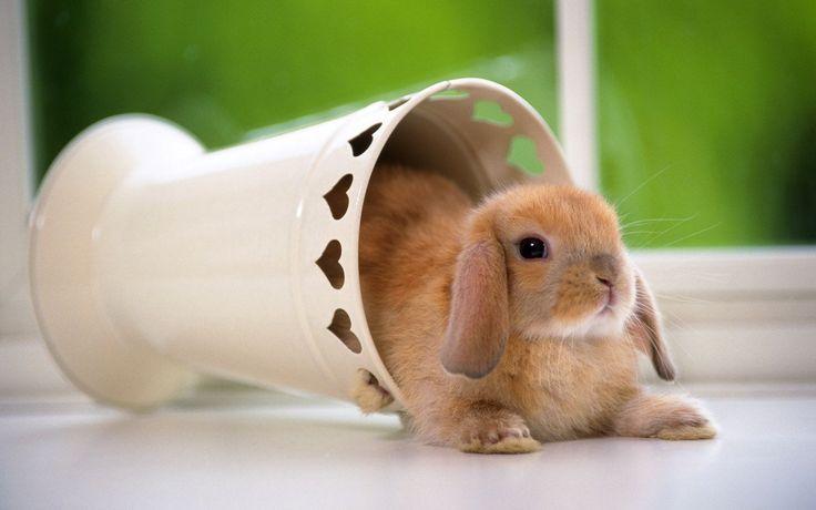 rabbit-wallpapers 3