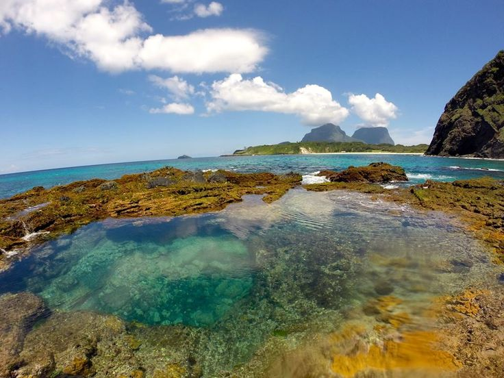 Low tide revels the underwater world to explore.  Pic - Katharina Ziesmann www.lordhoweisland.info