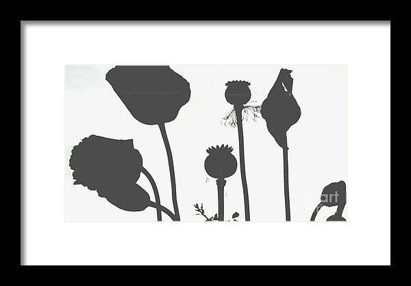 Poppy Flower Seed Pods Black And White Framed Print via #OrganicalBotanicals
