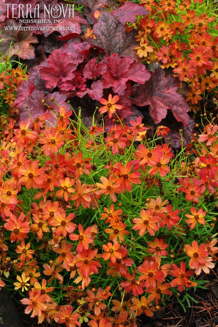 1189 best in the garden images on pinterest garden ideas