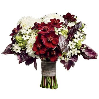 Rustic Red Bouquet - Add some drama to a wintry white bouquet with deep red blooms and unexpected elements like black basil. - Wedding bouquet of chocolate cosmos, ornithogalums, dahlias, and black basil, Peartree | Brides: Brides' 30 Best Wedding Bouquets of 2012 | Wedding Ideas | Brides.com