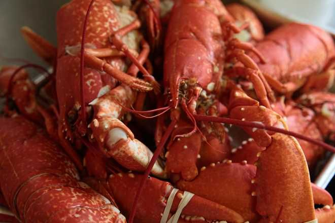 How to Prepare Lobster Claws With Gary Jones