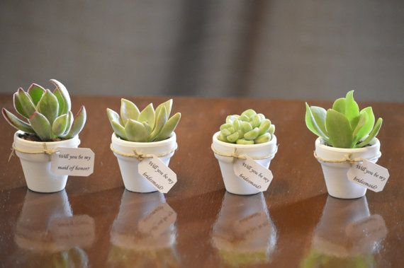 50 Mini Succulent Favors with Tag in ANY by StellaDesignsShop