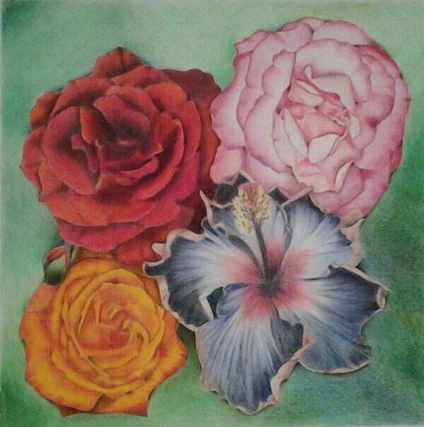 Hibiscus & Roses