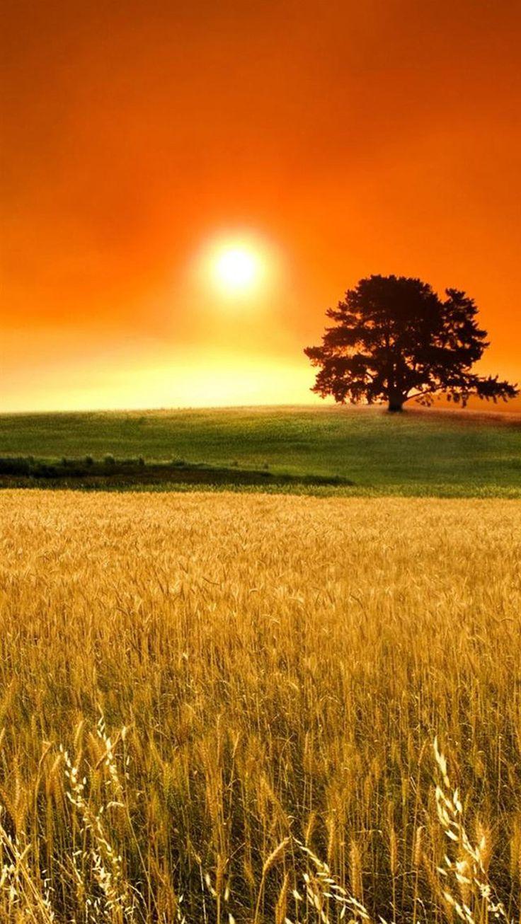 IPhone 6 Wallpaper Beautiful SunsetBeautiful
