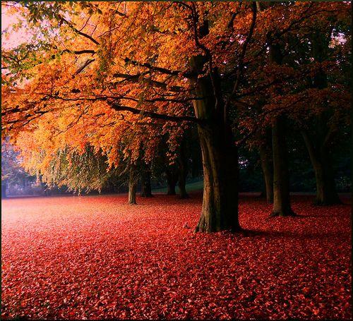 Sweden, Götaland, Skåne, Autumn, Trees.