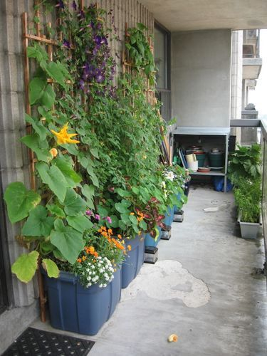 Balcony vertical garden in large plastic tub (less expensive & heavy than pottery)