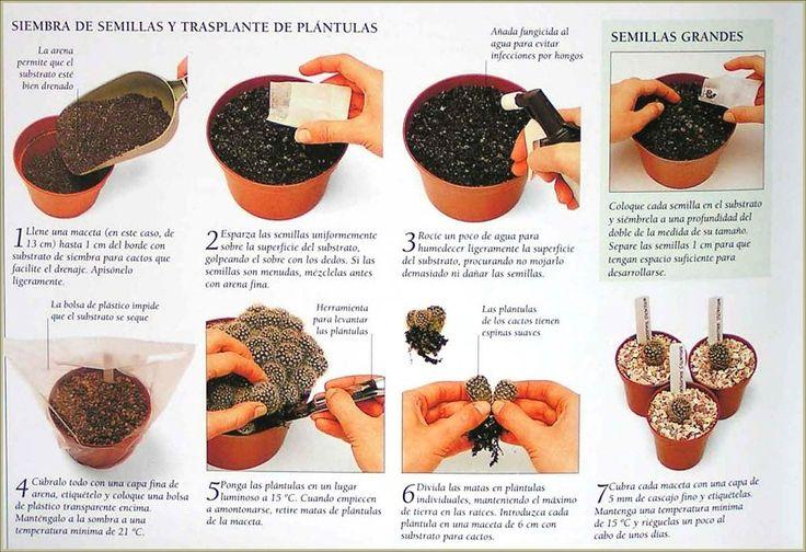 Las suculentas | Cuidar de tus plantas es facilisimo.com
