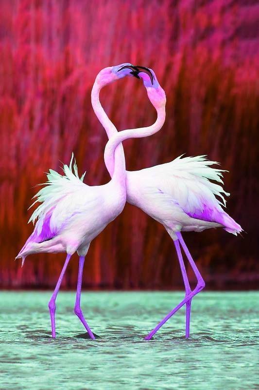 """""""Sai di che colore sono i fenicotteri? Rosa, dirai. No. Sono bianchi.  Diventano rosa dopo aver mangiato le alghe di un lago inospitale che  scelgono proprio perché lì nessuno può disturbarli. Migrano lì e si  nutrono di ciò di cui nessun altro potrebbe nutrirsi. Quelle alghe  putride contengono il ferro che rende le piume rosa. E sai perché? Per  gli amori. I fenicotteri divenuti rosa si attirano e si accoppiano.  Trasformano in vita anche la cosa più putrida, anzi proprio quella. Così  è…"""