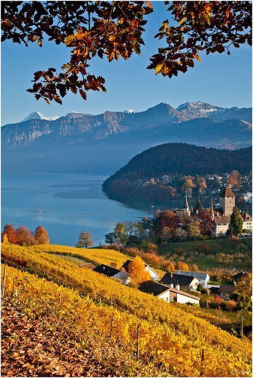 Spiez Vineyard, Lake Thun, Switzerland