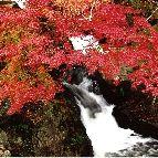 保殿の七滝。豊田市野原町 http://www.karen-shimoyama.jp/sightseeing.html