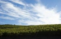 Vina Quintay has estate vineyards in both the Casablanca and the Leyda valleys in Chile.