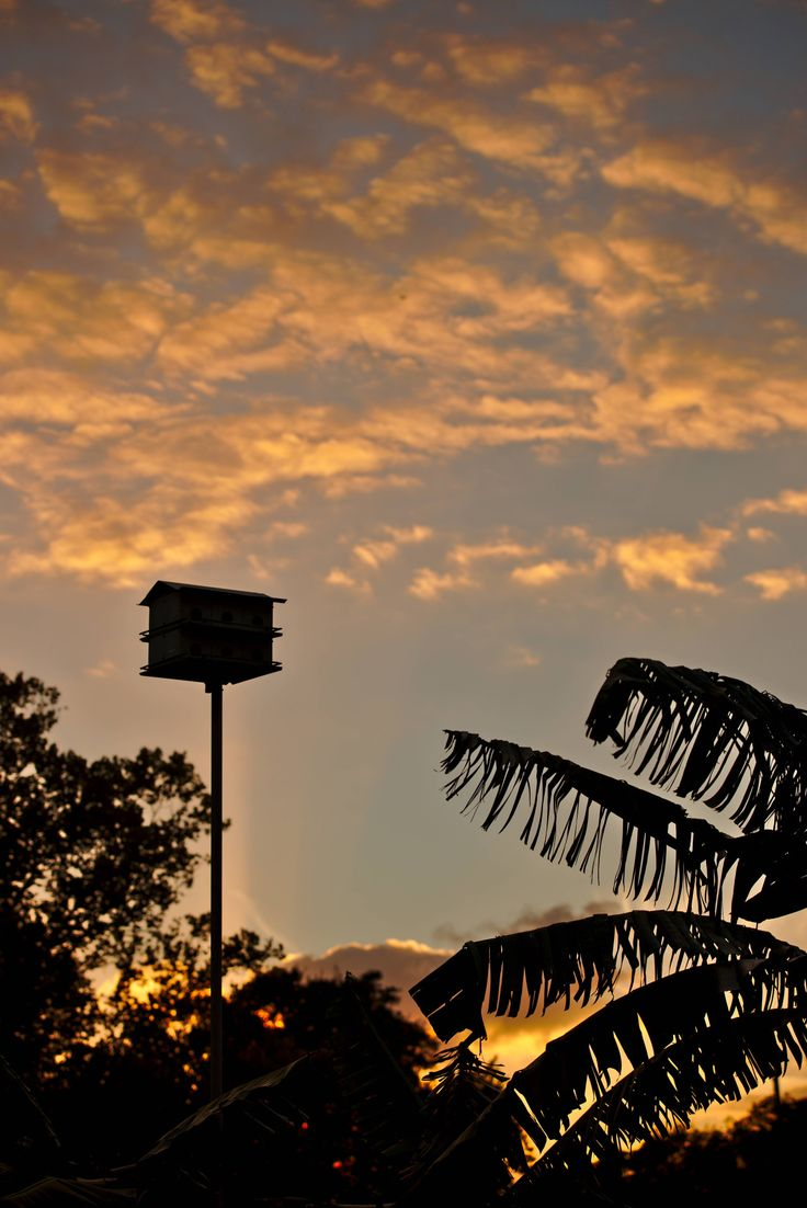Sunset over birdhouse [4928x7380]  - Casselberry, Florida