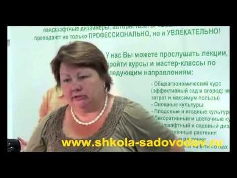 ЗЕМЛЯНИКА. Секреты высоких и стабильных урожаев - YouTube
