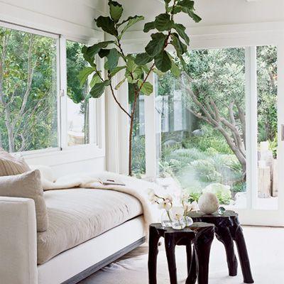 Lisa Romerein photo: Living Room, Trees, Bring, Leaves, Garden, Fiddle Leaf Fig, Figs