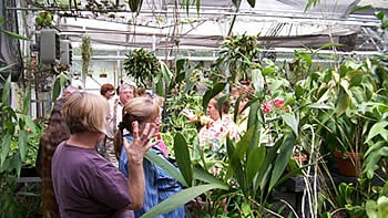 Open House at Piping Rock Orchids    (Speaker & Plant Sales: Mountain Orchids)