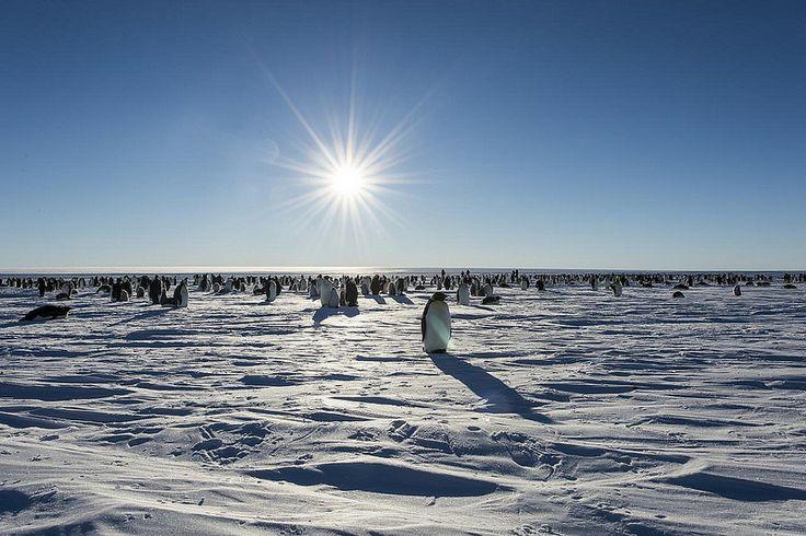 Antártida | por Christopher Michel