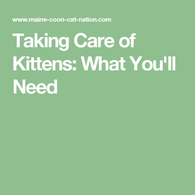 Taking Care of Kittens: What You'll Need