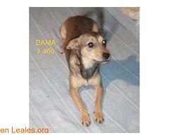 DAMA  #Adopción #adopta #adoptanocompres #adoptar #LealesOrg  Contacto y info: Pulsar la foto o: https://leales.org/animales-en-adopcion/perros-en-adopcion/dama_i2663 ℹ   NECESITAN ADOPCIÓN O CASA DE ACOGIDA URGENTE!!!  Estos perrito malviven en una casa donde no tienen recursos para mantenerlos. Están muy delgaditos y hay que sacarlos de allí lo antes posible.  Son de tamaño pequeño y pesarán unos 4 kilitos  En cada foto está el nombre y la edad.  Los ayudas a buscar un hogar??  Contacto…