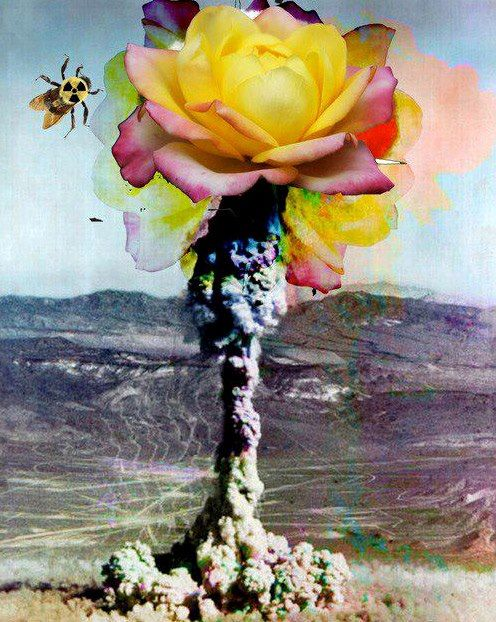 ◦ Flower Explosion ◦  artist: Unknown
