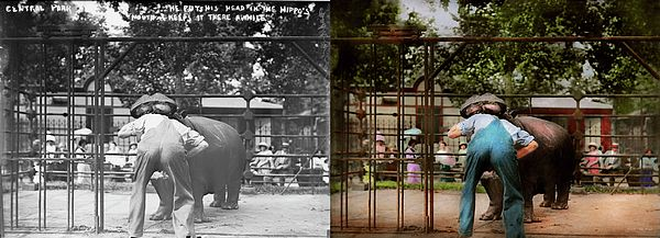 Colorized photo from 1910 Original Title: Man with head in hippo's mouth Location: Central Park Zoo, NY  So how did he die? A hippo ate him. Oh, that's just like him.....  Its times like this that makes you wonder how humanity survived at all, and it proves that people did stupid things, in the past as well. In the past, zoo animals were simply play things to be taunted. You could slip a zookeeper a few bucks and they will perform for you, like this guy did.  #savad #colorized