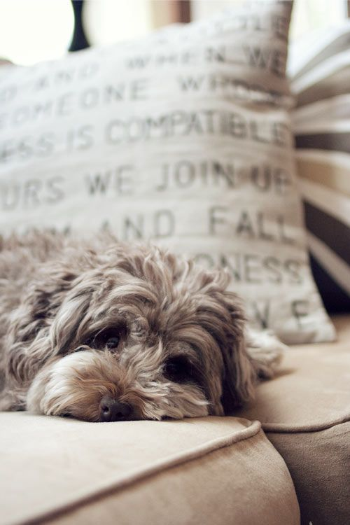 Create your own stenciled quote pillow with easy to follow instructions! (Cute dog not included)
