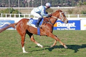 Quality National Yearling Sale offering from Boland Stud
