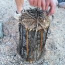 Build A Bundle Of Kindling In The Middle Of The Log