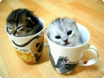 We've had five cups of coffee today and we're so wired! Give us more. But first get us out of these mugs. We're stuck.