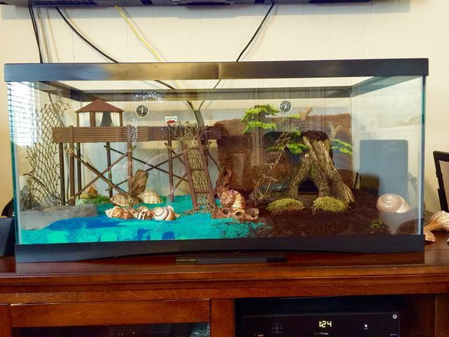 how to set up a crab tank