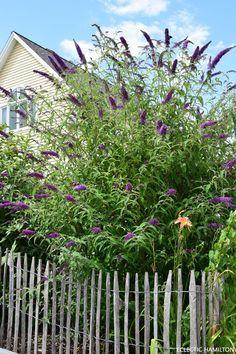 Es muss nicht immer exotisch sein: heimische Wildsträucher für euren Garten