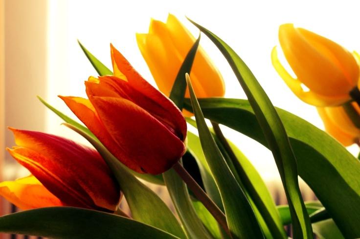 flovers  www.primaveratu.blogspot.com
