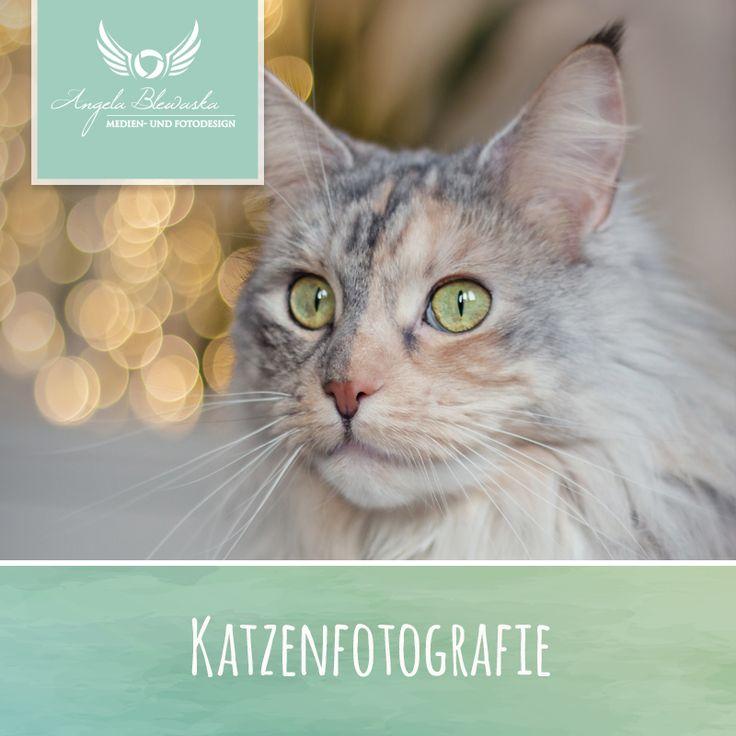 Katzen Mönchengladbach