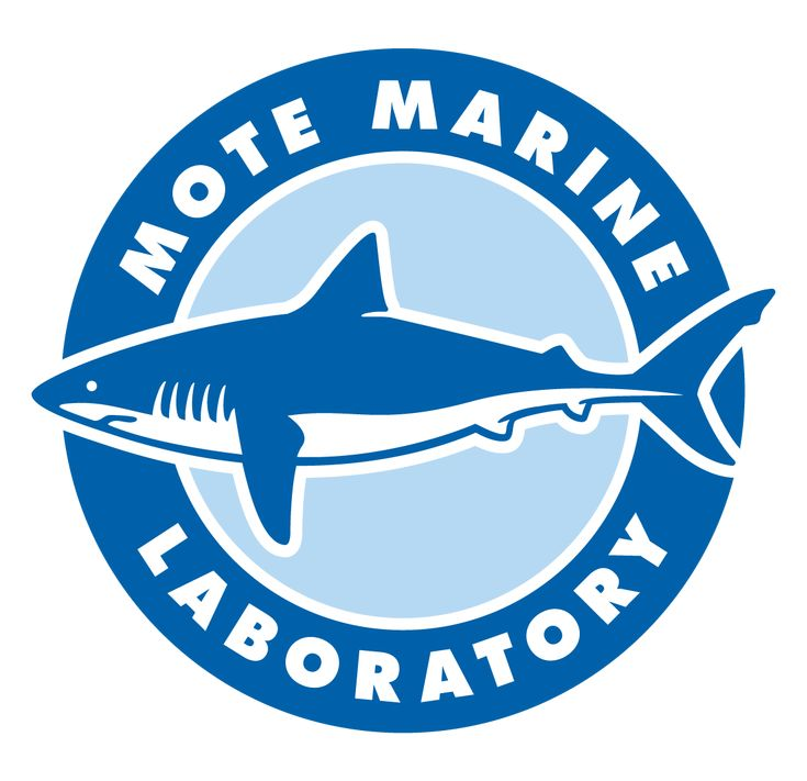 Mote offers a variety of internship opportunities for undergraduate/graduate students and recent college graduates interested in a career in the ocean sciences. Mote internships are designed to inspire students with a life-long appreciation and commitment to the conservation and sustainability of our oceans by providing unique, hands-on opportunities to conduct ocean science research, education or support services under the mentorship of Mote scientists,