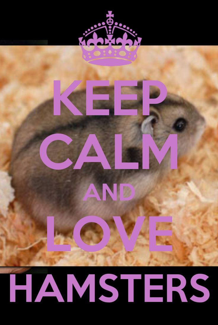 if you don't LOVE hamsters - something is coming your way #Ilovehamsters