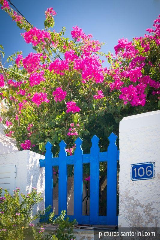 Blue painted garden gate in Firostefani, Santorini. #blue #pink #garden #santorini #greece #firostefani