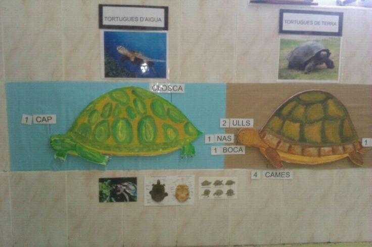 Projecte Les tortugues. 3 anys.