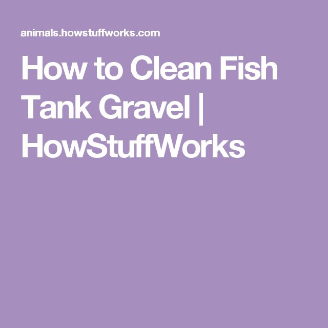 How to clean fish tank gravel fish tanks cleanses and for How to clean a fish tank