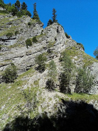 Reserve Tişiţa- A survival