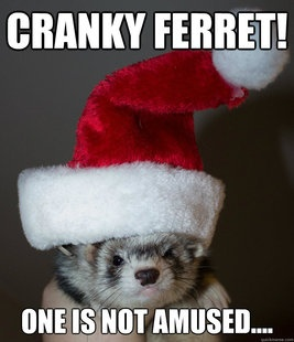 pin ferret meme on - photo #47