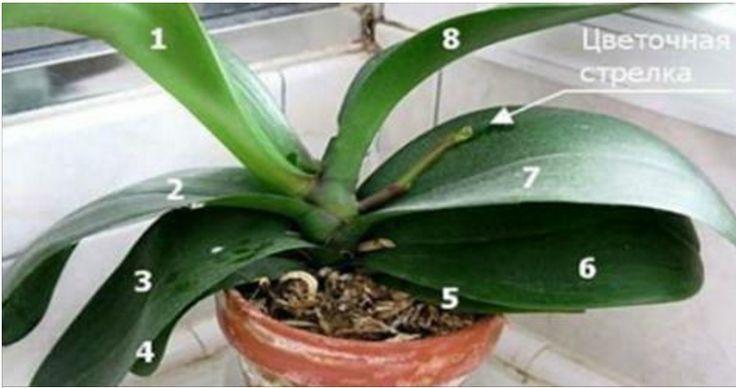 Все, что нужно знать о цветении орхидей.