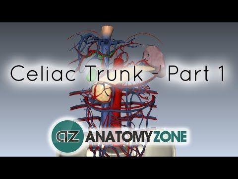 Celiac Artery/Trunk - Part 1 - Anatomy Tutorial - YouTube