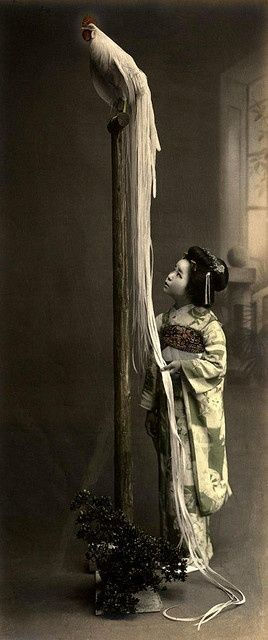Geisha and Long-tailed rooster. Old Japan. 生類との暮らし