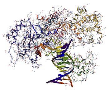 UAB research sheds new light on RNA polymerase