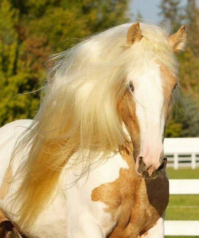 Horse with beautiful soft blond mane.