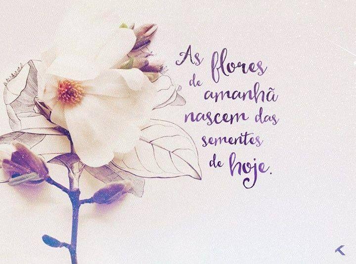 As flores de amanhã nascem